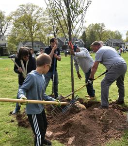 Jefferson students, parents, staff and other volunteers plant more than 20 young trees around the grounds of the school, thanks to a community partnership involving town officials, the Rotary Club of Westfield and the Jefferson school community.
