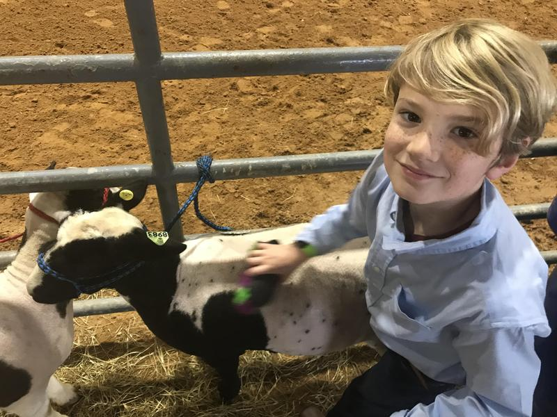 West Lauderdale Elementary Student at Livestock Show & Sale