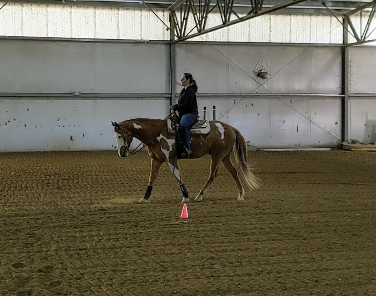 Baye on horse